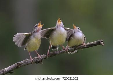 the birds singing