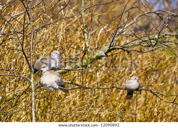 Birds sit in the branch of a tree