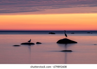 The birds sit on the rocks late at night.  Birds silhouettes in stones in the sea at sunset
