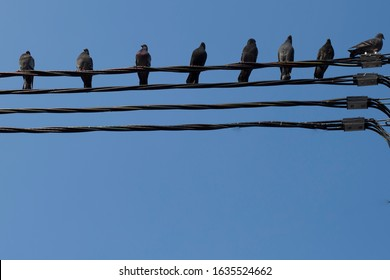 Birds are sitting on electric wires against the blue sky.