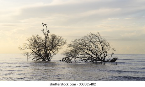 birds sitting on mangrove trees