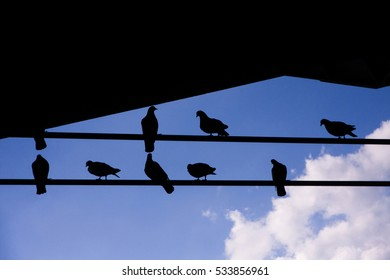 birds sitting on the power lines