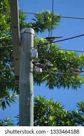 Birds sitting on powerlines