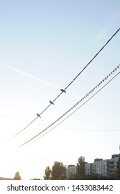 Birds sitting on the wires in the early morning thinking about free flight