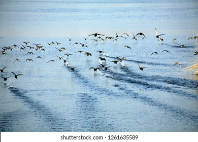 Birds skimming the waves