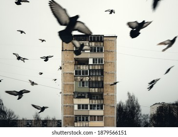 Birds soar in the background of a high-rise building. Cloudy weather, oppressing in melancholy
