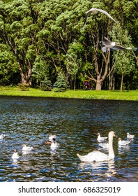 Birds such as swans and gulls in the lake in wild park with green trees.
