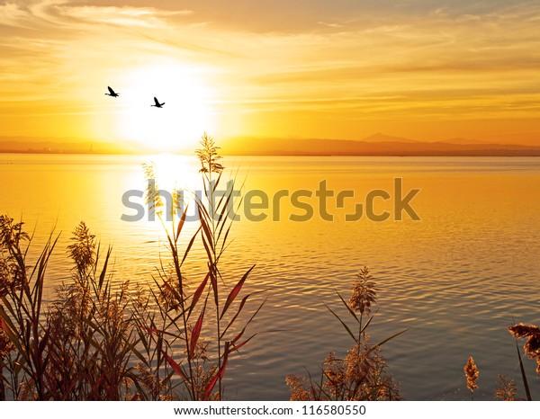 birds and the sun