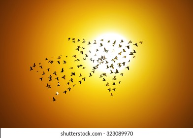 Birds with sunrise , growth development concept