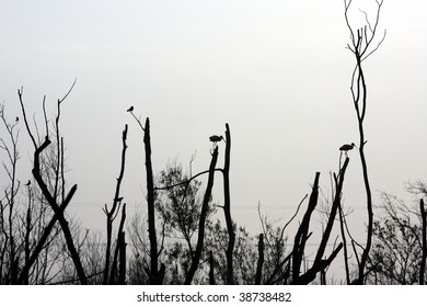 birds in swamp