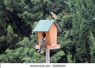 The Birds Titmouse feeding on a small wooden birds house