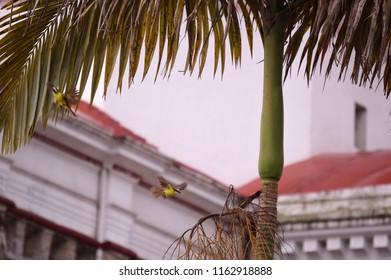 Birds and tree branch. Cuetzalan Del Progreso, Puebla Mexico.