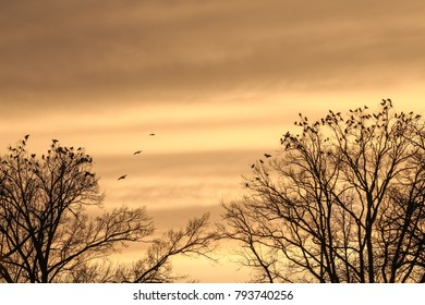 Birds at tree tops. Tree silhouette on the sunset