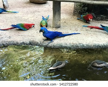 Birds' tropical park with blue and red ara brazil