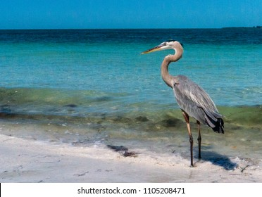 Birds walking on the sand along the beach