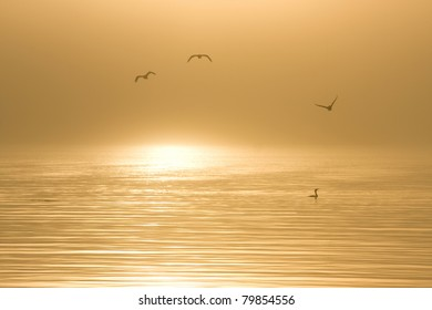 Birds in water on a foggy morning in California