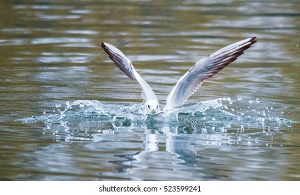 Birds weeds wings a feather take-off to fly water a beak scope