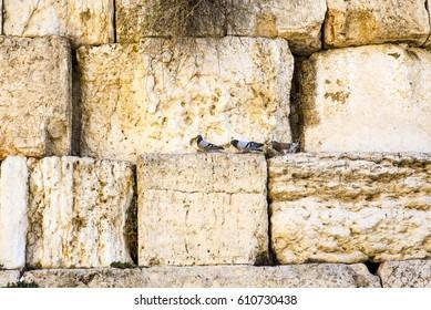 Birds at the Western Wall, Old City Jerusalem