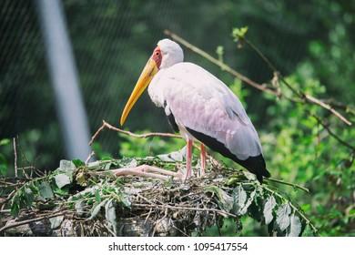 Birds in zoological garden