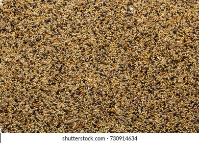 Birdseed on white background