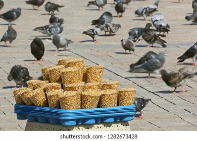 birdseed seller feeding birds