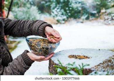 Birdseed is sprinkled in the winter
