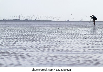 Birdwatcher counting birds in the Wadden Sea, Germany.