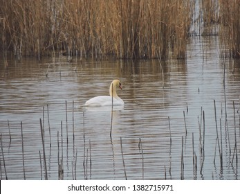 Birdwatching activity: A swan swimming in a lake.