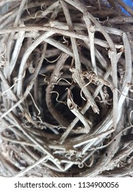 Birth Nests stikcs