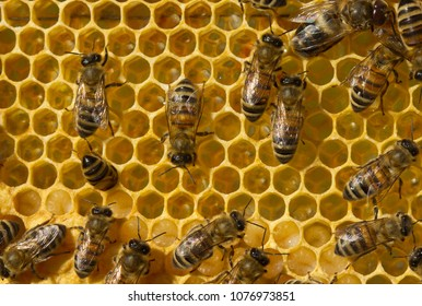 Birth of a new life in the colony of bees