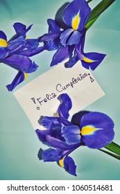 Happy birthday spanish images stock photos vectors shutterstock birthday card happy birthday greetings in spanish feliz cumpleaos with iris flowers against bookmarktalkfo Images