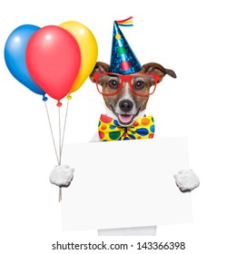 birthday dog with balloons and a white placard