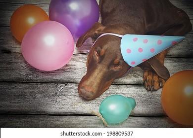birthday dog - brown fun doberman pinscher dog with ball and dog trick