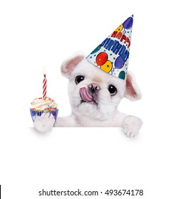 Birthday dog . Over white banner.