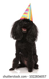 birthday dog wearing party hat looks up on white background