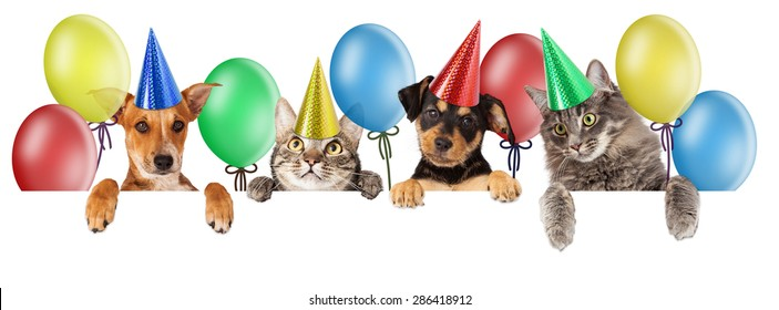 Dog Cat Happy Birthday Images Stock Photos Vectors Shutterstock