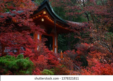 Bishamondo is one of the best spot to see red autumn foliage