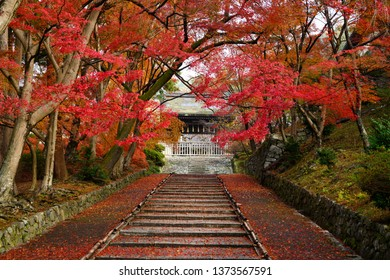 Bishamondo Temple is renowned for the stone steps leading to its entrance being ablaze in crimson red from the falling leaves.