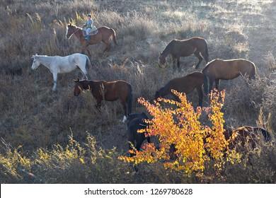 BISHKEK, KYRGYZSTAN - OCTOBER 14, 2017: Horses in the countryside of Bishkek, Kyrgyzstan.