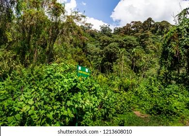 Bisoke volcano treking road, Volcanoes National park, tropical forest, sign board about road to Bisoke crater lake,   Rwanda