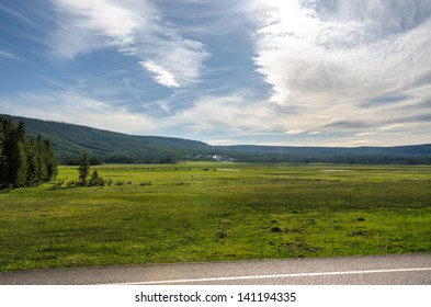 Bison in the grasslands of Yellowstone National Park in Wyoming