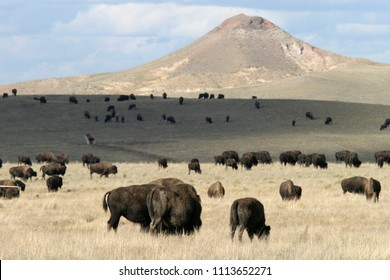 Bison herd and butte on Wyoming prairie, Wyoming, BLM, USA