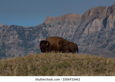 Bison on mountain range