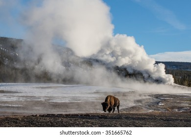 a bison walking in front of a massive steaming geyser in yellowstone national park