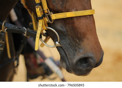 a bit is placed into the horse or pony mouth for asking direction when riding.