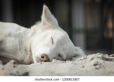 A bitch sleeping on sand.