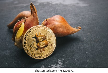 Bitcoin bubble cryptocurrency with Tulip bulbs -Tulip mania market crash concept image
