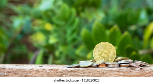 Bitcoin and coins on nature background