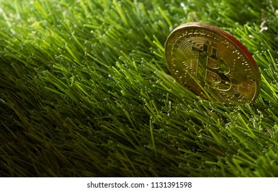 Bitcoin on green grass.