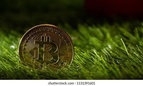 Bitcoin on green grass.